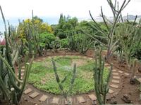 Один из уголков Ботанического сада