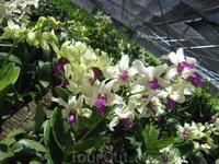 орхидейка ))