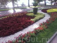 разнообразие цветов - поражает!