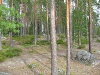 И снова лес
