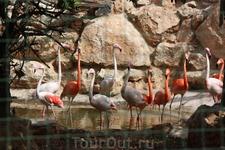 Парк Птиц и Животных.