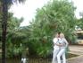 Май прекрасен тем, что все цветет - даже пальмы. После ливня пальмы стоят в воде.