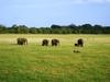 Фотография Национальный парк Вилпатту