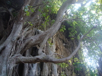 Дерево на Рейли