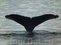 Около судна часто проплывают киты.