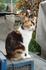 кошек в Городце не меньше, чем в самом Габрово
