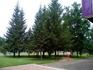 Город ОЧЕНЬ зеленый. Амурский бархат и множество елей. Ели, наверное, позволяют ему и зимой оставаться зеленым.