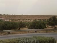 Основное достояние страны и основной пейзаж за окном - оливковые рощи.