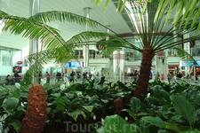 оазис под сводами аэровокзала