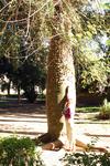 Пробковое дерево в ботаническом саду