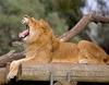 Фотография Зоологический центр в Рамат-Ган