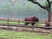 Короче и сельское хозяйство посетили, образцово показательное.