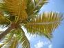 Медитация под пальмой