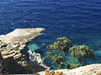Море, скалы, дерево
