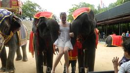 после шоу слоны с удовольствием снимутся с вами