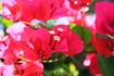 Цветы повсюду..