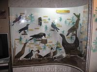 Птицы Белозерья.