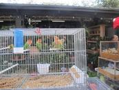 Птичий рынок на о. Ситэ