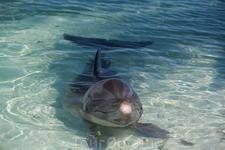 пляж Сирена, дельфинчки в загоне в количестве 2х штук обитают. жалко их - там воняет преужасно и места дл них очень мало
