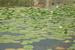 Экскурсия на Скадарское озеро. На лодочке доплыли до местного музея. Ознакомились с его экспанатами. Потом доплыли до ресторана, там был обед. Кормили вкусно приготовленой рыбой. После обеда купание в