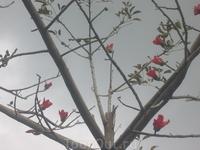 Оригинальное дерево-цветы есть,листьев нет.