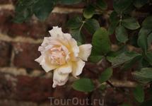 Hampton Court Palace.Цветулечек в саду.