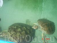 Нячанг. Институт океанографии. Здесь в аквариумах живут представители местной морской фауны