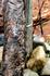 А вот это дерево! Вы такое когда-нибудь видели? Почему у него такой ствол?
