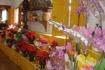 Парати-цветы натуральные красивые-бразильские (что у них только не растет)