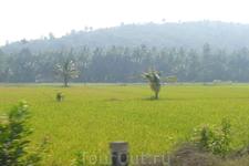 по дороге с рисовыми полями :-)
