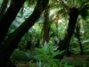 Фотография Ботанический сад Крайстчерча