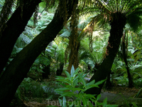 Ботанический сад Крайстчерча