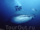 Вулкан Майон и плавание с китовыми акулами