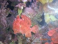 Вот такая красота обитает в Красном море!!!