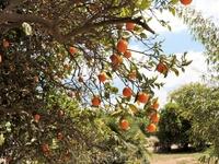 Солнечные фрукты и солнечное настроение