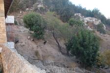 "Вид на склон горы Бешпармак из храма ""Эхо Господне"" (Антифонидис)"