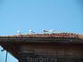 болгарские чайки