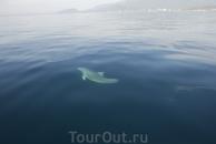 дельфинчики иногда нам составляли компанию