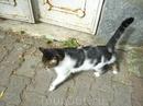 турецкие кошки повсюду, никого не боятся, ко всем ластятся.