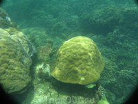 Кораллы у Черепашьего острова.