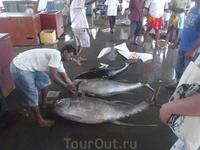 тунец )рыбный рынок