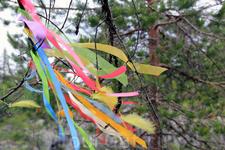 Местами встречаются деревья с яркими ленточками на ветвях...