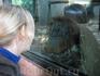 В римском зоопарке. Мы похожи?:)