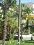 опять пальмы