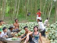 Умные эти вьетнамцы. С горной бахчи сплавляют по реке,а в лесу у дороги вылавливают.