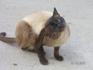 встретившаяся нам кошка