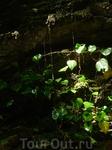 """Водопад """"Слезы Снегурочки"""" в Берендеевом царстве представляет собой тоненькие стекающие струйки и капельки"""