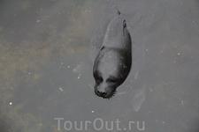 А вот и самый старший из детенышей. Плавал у бережка, глубоко не заплывал...
