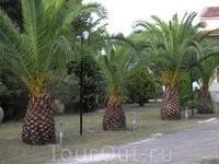А это настоящий пальмовый сад на территории студии