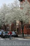 Сумасшедшее цветение. Весна в Филадельфии